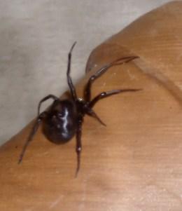 Spider Bios